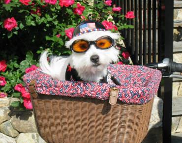 """Фото:""""Doggles солнцезащитные очки для собак"""""""