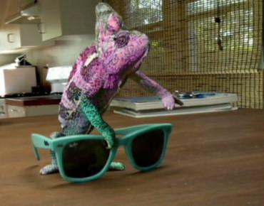 """Фото:""""Популярность хамелеона и солнцезащитные очки Ray-Ban"""""""
